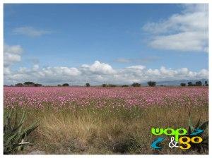 Huasca - Campo