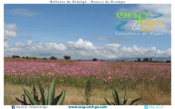 Huasca-de-ocampo