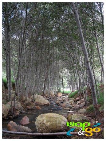 Bosque del Zembo
